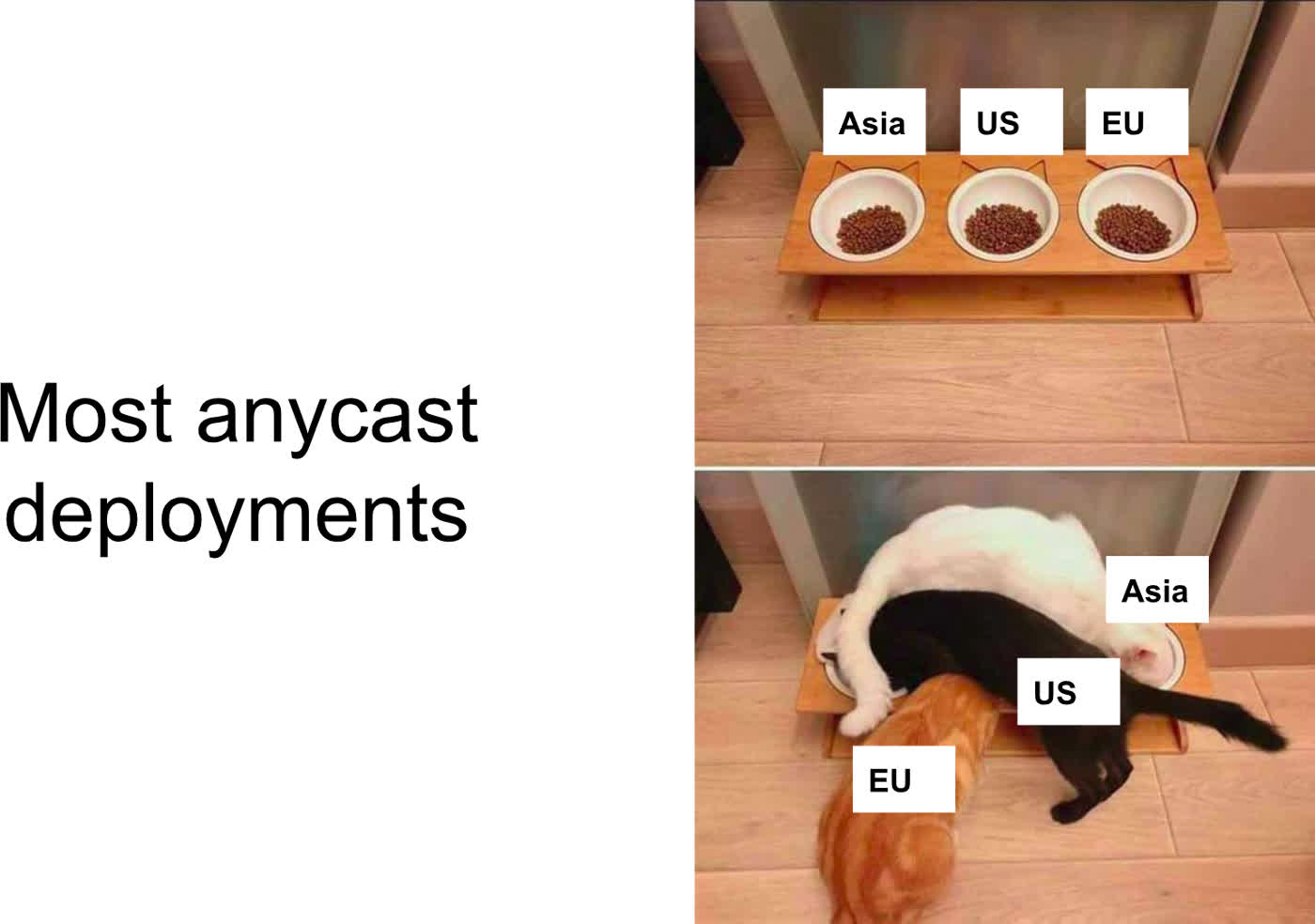Cat bowl based anycast routing